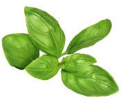 Huile essentielle Basilic tropical BIO Aroma-Zone