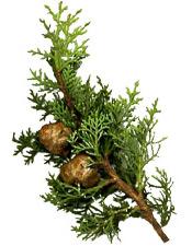 Huile essentielle Cyprès toujours vert Aroma-Zone
