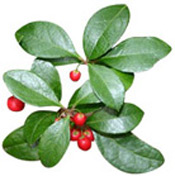 Huile essentielle Gaulthérie odorante BIO Aroma-Zone