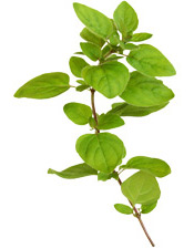 Huile essentielle Marjolaine à coquilles BIO Aroma-Zone