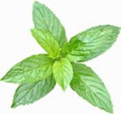 Huile essentielle Menthe citronnée Aroma-Zone