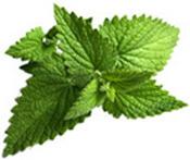 Huile essentielle Menthe poivrée BIO Aroma-Zone