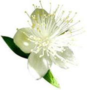 Huile essentielle Myrte rouge BIO Aroma-Zone