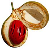 Huile essentielle noix de Muscade BIO Aroma-Zone