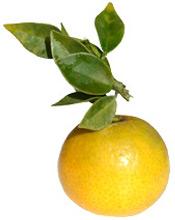 Petitgrain aceite esencial BIO Aroma-Zone