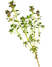Huile essentielle Thym à thujanol Aroma-Zone