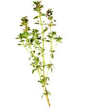 Huile essentielle Thym à thymol de Provence BIO Aroma-Zone