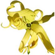 Huile essentielle Ylang-Ylang III BIO Aroma-Zone