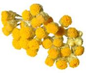 Hydrolat Hélichryse italienne de Provence BIO Aroma-Zone
