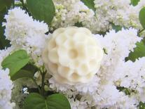 Mon bouquet de fleurs pour le bain : fleur blanche