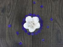 Composition à diffuser Violette & Tubéreuse